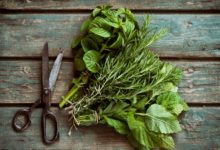 Photo of Waste thyme: why should we buy more herbs than the recipe calls?
